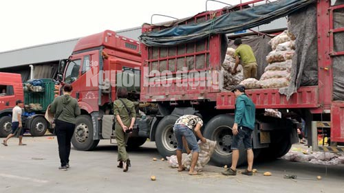 Lật mặt nông sản Trung Quốc nhái hàng Đà Lạt - Ảnh 1.
