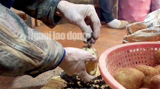 VIDEO điều tra: Đường đi nông sản Trung Quốc nhái Đà Lạt - Ảnh 7.