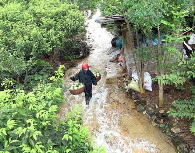 [Photo] Lạng Sơn được mùa na, sản lượng ước đạt hơn 30.000 tấn  - Ảnh 1.