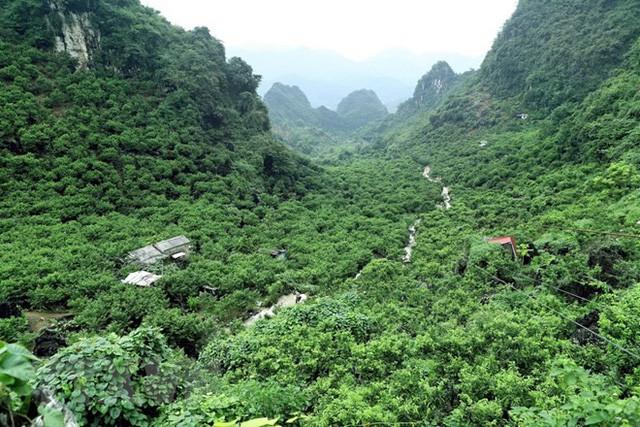 [Photo] Lạng Sơn được mùa na, sản lượng ước đạt hơn 30.000 tấn  - Ảnh 3.