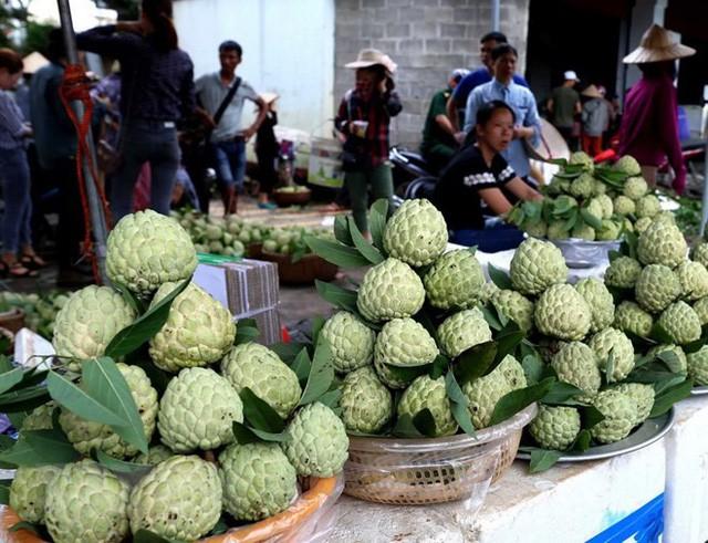 [Photo] Lạng Sơn được mùa na, sản lượng ước đạt hơn 30.000 tấn  - Ảnh 8.