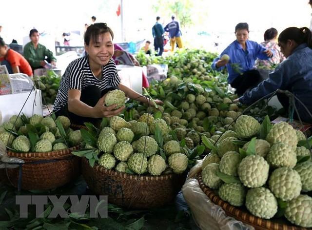 [Photo] Lạng Sơn được mùa na, sản lượng ước đạt hơn 30.000 tấn  - Ảnh 9.