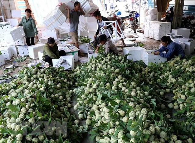[Photo] Lạng Sơn được mùa na, sản lượng ước đạt hơn 30.000 tấn  - Ảnh 10.