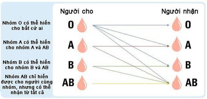 Đột phá cứu mạng hàng triệu người: Các nhà khoa học chuyển hiệu quả máu nhóm A, B thành nhóm O, có thể truyền cho bất kỳ ai - Ảnh 2.