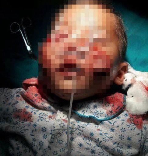 Hàng loạt vụ chó nuôi hung dữ tấn công chủ và người nhà gây chấn động - Ảnh 5.