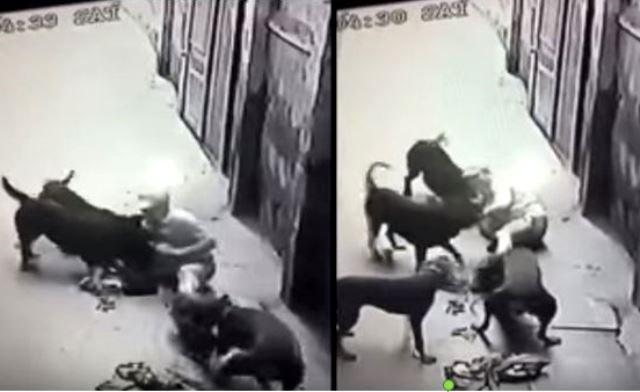 Hàng loạt vụ chó nuôi hung dữ tấn công chủ và người nhà gây chấn động - Ảnh 6.