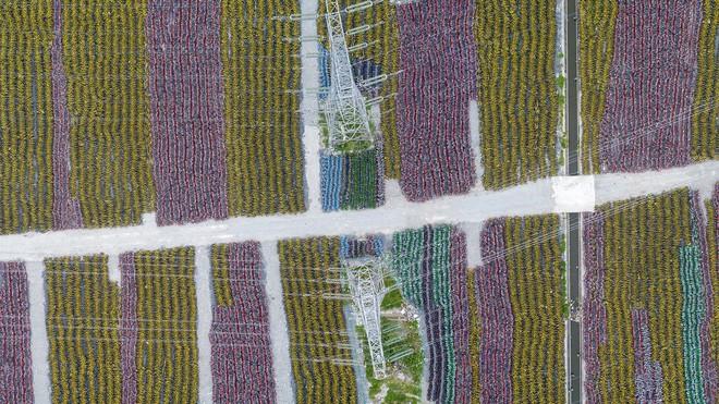 Choáng ngợp với những tấm ảnh chụp từ trên không các nghĩa địa xe đạp tại Trung Quốc - Ảnh 4.