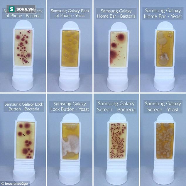 Bộ phận nào trên điện thoại chứa nhiều vi khuẩn nhất: Sử dụng hàng ngày nhưng ít ai biết - Ảnh 1.