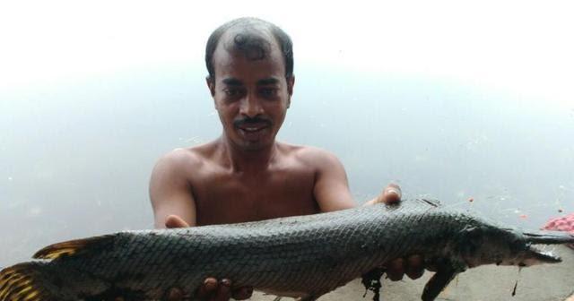 Quái vật tiền sử ở hồ Ấn Độ: Hóa thạch sống phải dùng rìu mới cắt được - Ảnh 2.