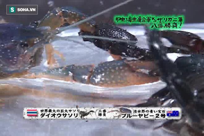 Thủy chiến ác liệt giữa tôm hùm và bọ cạp: Cặp càng nào khỏe hơn? - Ảnh 7.