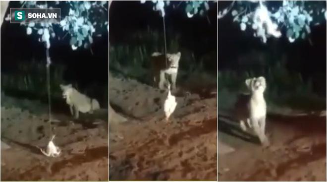 Treo gà lên cây để hành hạ sư tử, người đàn ông này mắc sai lầm nghiêm trọng - Ảnh 1.