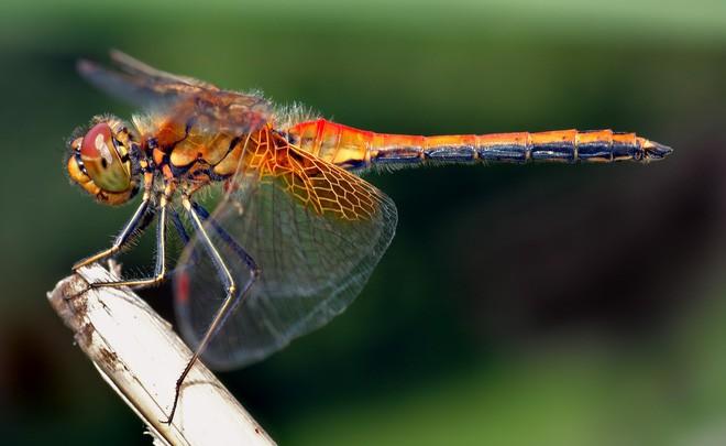 Một loạt những sự thật thú vị nhưng… vô bổ của thế giới động vật - Ảnh 16.