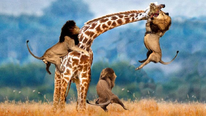 Một loạt những sự thật thú vị nhưng… vô bổ của thế giới động vật - Ảnh 7.