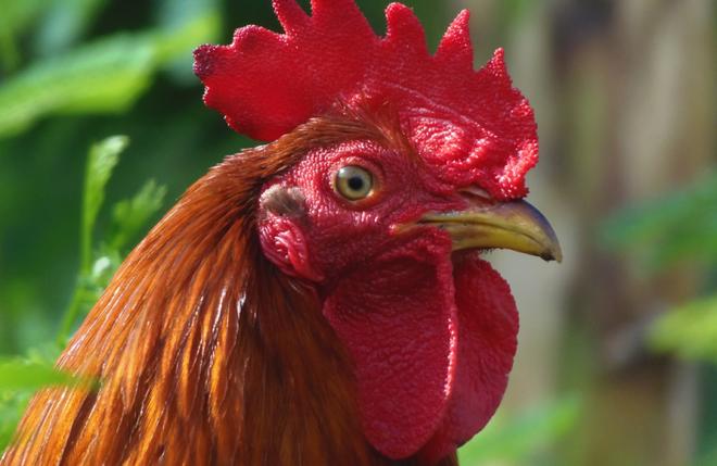 Một loạt những sự thật thú vị nhưng… vô bổ của thế giới động vật - Ảnh 8.