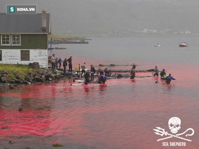 Bờ biển lại đẫm máu cá heo, PETA xót xa nói về nỗi đau và sự sợ hãi - Ảnh 2.