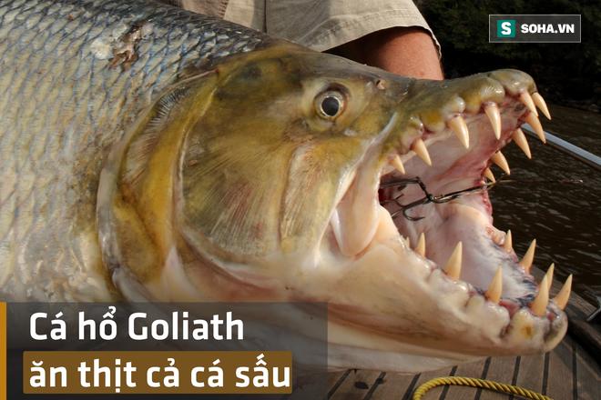 Bắt được cá hổ Goliath - loài cá tàn bạo bậc nhất châu Phi, ăn thịt cả cá sấu - Ảnh 1.