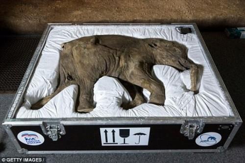"""""""Công viên kỷ Jura"""" sắp ra mắt tại Nga với sự hồi sinh của voi ma mút - Ảnh 1."""