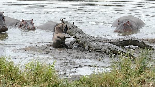 Cơn ác mộng khi gặp những loài động vật mang vẻ ngoài ngoan hiền, nhưng đằng sau thì tàn ác không ngờ - Ảnh 9.