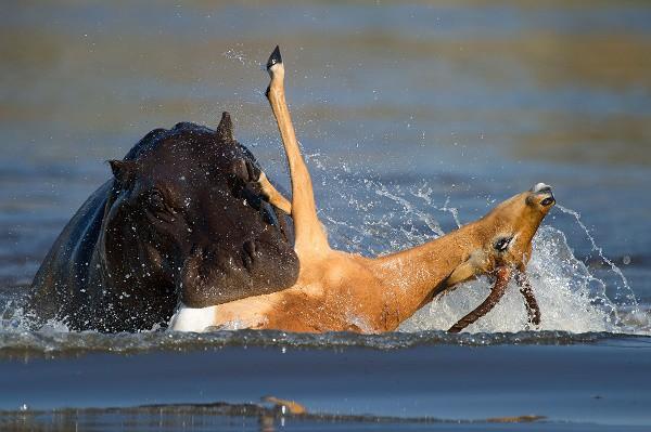 Cơn ác mộng khi gặp những loài động vật mang vẻ ngoài ngoan hiền, nhưng đằng sau thì tàn ác không ngờ - Ảnh 10.