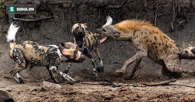 Gặp lại kẻ thù giết con, linh cẩu trả thù máu lạnh khiến nạn nhân sống không bằng chết - Ảnh 1.