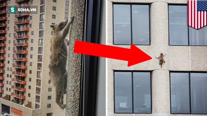 Liều lĩnh nhảy xuống từ tầng 9 chung cư, gấu mèo vẫn sống sót một cách kỳ diệu - Ảnh 1.