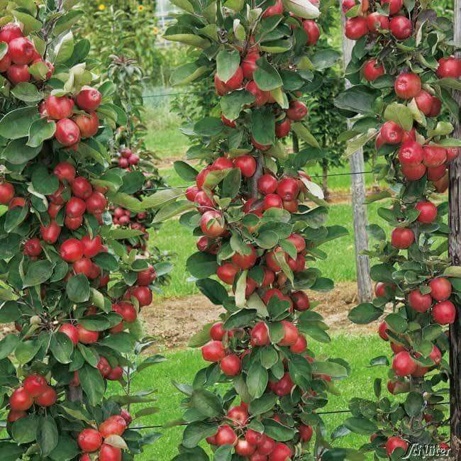 Mê mẩn giữa vựa táo ngon đẹp nức tiếng nhất Ba Lan - Ảnh 1.