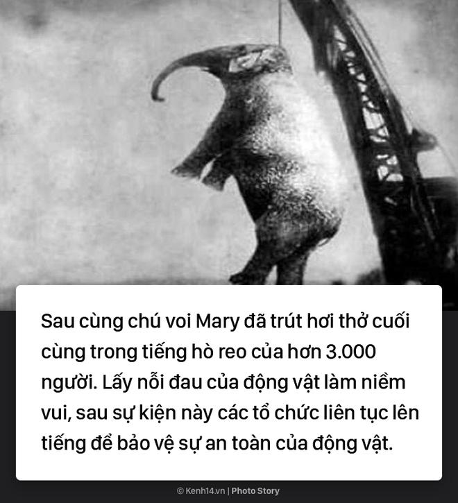 Câu chuyện chấn động thế giới: Chú voi trong rạp xiếc bị treo cổ vì giết người da trắng - Ảnh 7.
