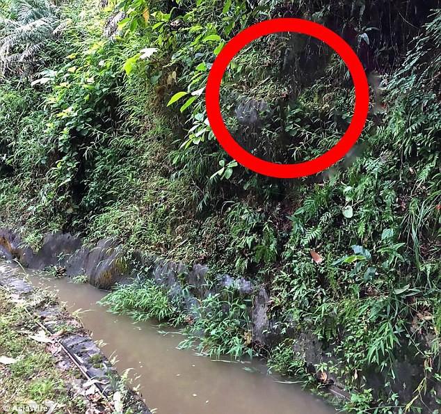 Bé gái 20 tháng tuổi sống sót kỳ diệu sau gần 1 tuần đi lạc trong rừng, không có thức ăn hay nước uống - Ảnh 2.