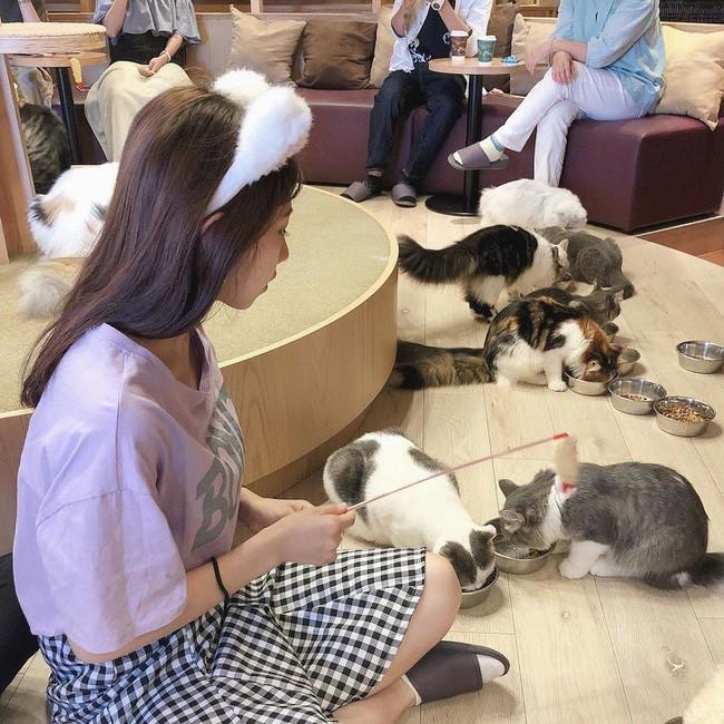 Người Nhật đã dạy cả thế giới về cuộc sống cân bằng, đơn giản và hạnh phúc qua 11 điều sau đây - Ảnh 8.