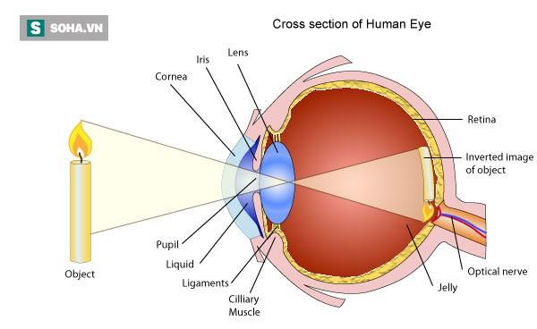 Chuyên gia cảnh báo: Thiết bị điện tử thông minh đang cướp đi nhiều đôi mắt trẻ em Việt - Ảnh 1.