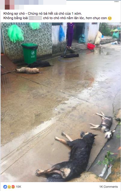 Hình ảnh hàng chục chú chó của cả xóm bị kẻ xấu đánh bả chết trong đêm khiến nhiều người phẫn nộ - Ảnh 1.