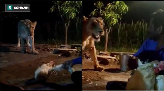 Sư tử hoang tiến vào khu dân cư và hành động của chủ nhà khiến mọi người phẫn nộ - Ảnh 2.