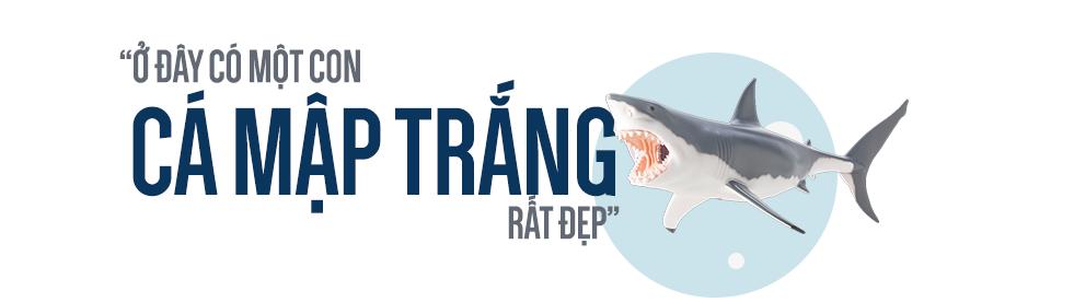 Con cá rất đẹp đột ngột mất tích và cuộc săn tìm đàn cá mập trắng lớn nhất thế giới - Ảnh 5.