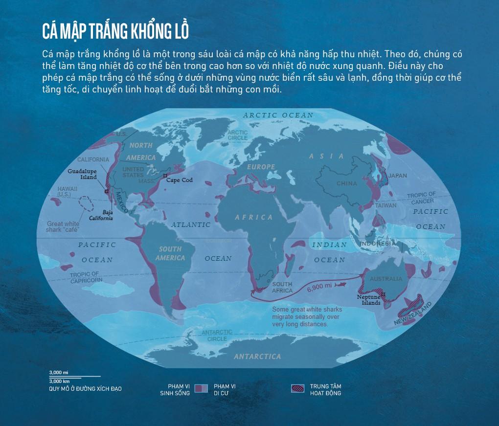 Con cá rất đẹp đột ngột mất tích và cuộc săn tìm đàn cá mập trắng lớn nhất thế giới - Ảnh 10.