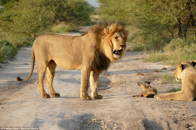 Chuyện sư tử và cáo: Bài học cuộc sống ý nghĩa mà ai đi làm cũng đều nên biết - Ảnh 1.