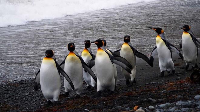 Ở Canada, trời lạnh đến mức sở thú nơi đây phải đưa chim cánh cụt vào trong nhà tránh rét - Ảnh 2.