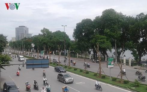 Chủ tịch Hà Nội: Trồng cây gặp khó khăn do người dân đổ nước sôi - Ảnh 1.