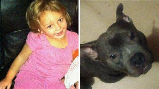 Mua chó Pit Bull về cho con gái làm bạn, người cha không ngờ rằng 5 ngày sau thảm kịch xảy đến với gia đình - Ảnh 1.