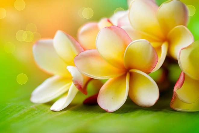 Chuyên gia Đông y chỉ ra sự thật về việc sử dụng hoa đại ngâm rượu giúp giảm cân - Ảnh 3.