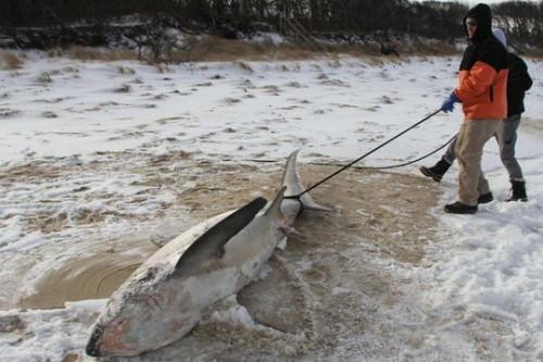 Nước Mỹ tê cứng trong 'bom bão tuyết': Người chết cóng, cá mập sốc nhiệt và hàng loạt ô tô 'biến mất' - Ảnh 5.