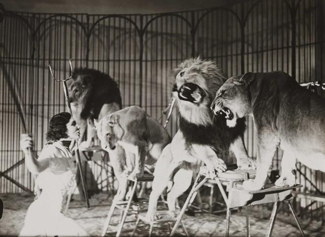 Công việc thuần hóa sư tử trong rạp xiếc được thực hiện như thế nào? - Ảnh 5.