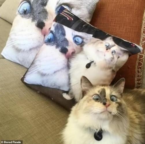Ảnh: Cười ngất trước những khoảnh khắc siêu hài hước của mèo cưng - Ảnh 1.