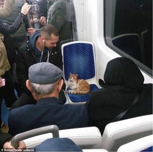 Ảnh: Cười ngất trước những khoảnh khắc siêu hài hước của mèo cưng - Ảnh 2.