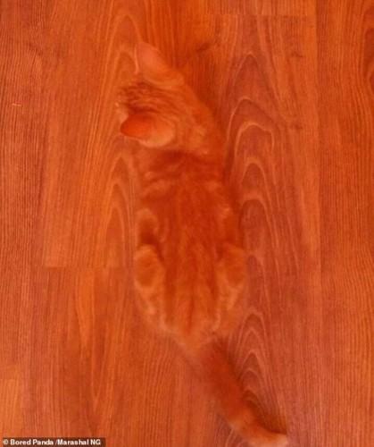 Ảnh: Cười ngất trước những khoảnh khắc siêu hài hước của mèo cưng - Ảnh 11.