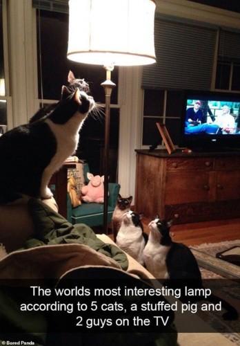 Ảnh: Cười ngất trước những khoảnh khắc siêu hài hước của mèo cưng - Ảnh 4.
