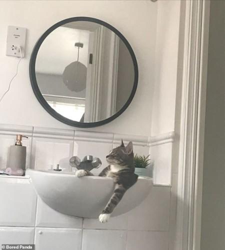 Ảnh: Cười ngất trước những khoảnh khắc siêu hài hước của mèo cưng - Ảnh 5.