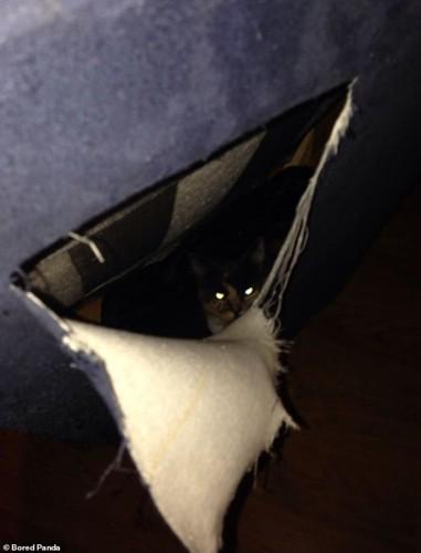 Ảnh: Cười ngất trước những khoảnh khắc siêu hài hước của mèo cưng - Ảnh 8.