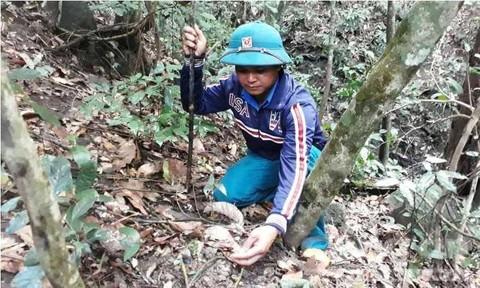Lên rừng tìm món ốc núi trứ danh ở Tây Nguyên - Ảnh 1.