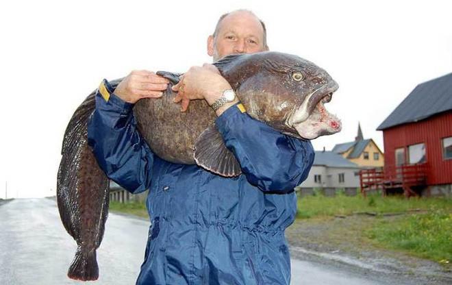 Con cá này xấu đau đớn nhưng người ta vẫn săn bắt nó đến mức sắp tuyệt chủng - Ảnh 1.