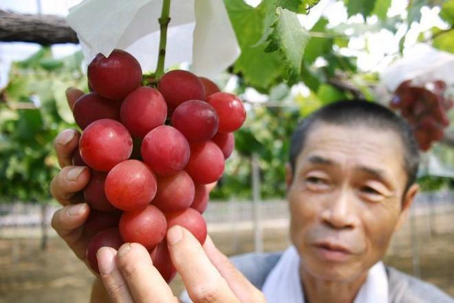 Những món ăn đắt xắt ra miếng giới nhà giàu Việt săn lùng trong Tết Kỷ Hợi - Ảnh 4.